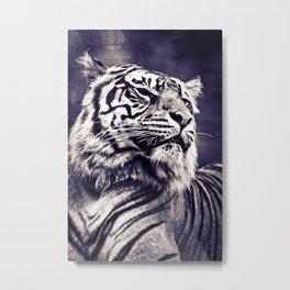 Sumartran Tiger in Two Tone Metal Print