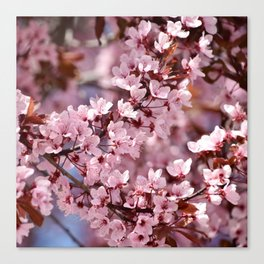 Pink & Pretty Canvas Print