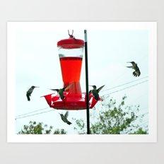 Humming Birds migrating Art Print
