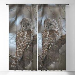 Sleepy Owl Blackout Curtain