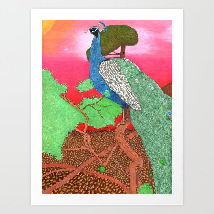 Peacock at sunrise Art Print