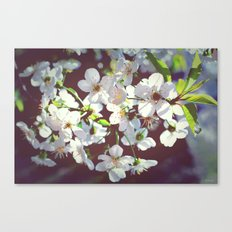 need some spring right now  Canvas Print