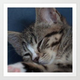 Sleeping Kitty Art Print
