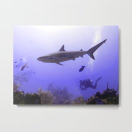 Swimming Shark Metal Print