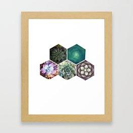 Succulent Geometry Framed Art Print