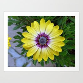 Pretty as Sunshine Art Print