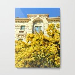 Mimosas in Nice Metal Print