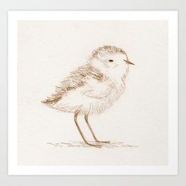 Piping Plover Chick Art Print