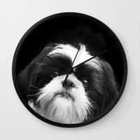 shih tzu Wall Clocks featuring Shih Tzu Dog by ritmo boxer designs