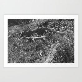 Battery East Trail, SF, CA Art Print