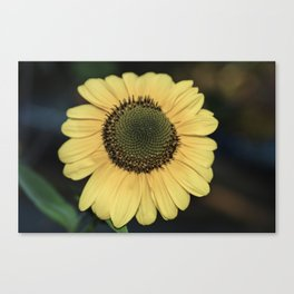 Autumn Sunfower Canvas Print