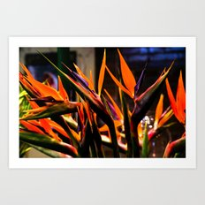 Birds o Paradise Art Print
