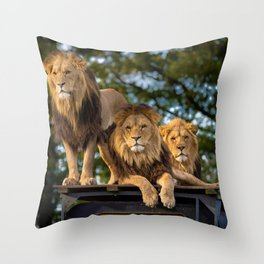 Lion Kings of the Serengeti, Africa Throw Pillow