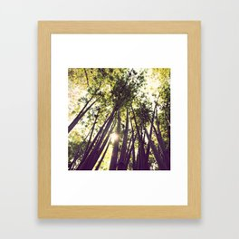bamboo dreams pillow case Framed Art Print