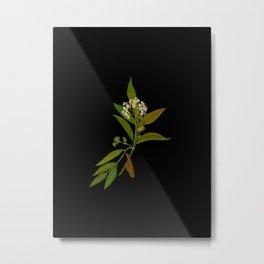 Sambucus Ebulus Paper Flower Collage Vintage Botanical Floral Art Mary Delany Metal Print