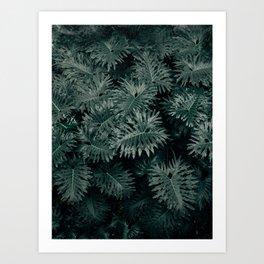 Monstera Leaves - Blue Art Print
