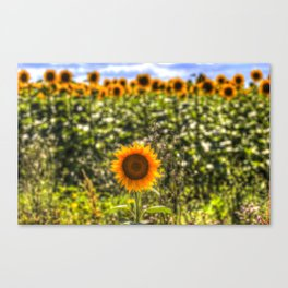 The Lonesome Sunflower Canvas Print