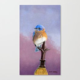 Backyard Bluebird- Cropped Canvas Print