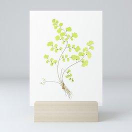 Maidenhair Fern Mini Art Print