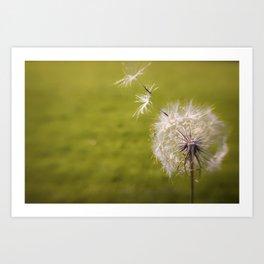 Wishing on a Dandelion Art Print