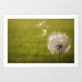 Wishing on a Dandelion Art Print