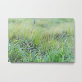 Dewey Pastures Metal Print