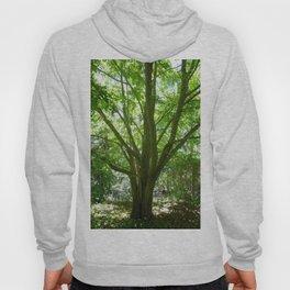 Tree of Life - Summer Hoody