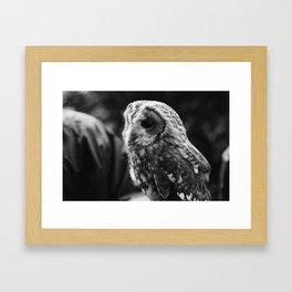 Lovely Owl. Framed Art Print