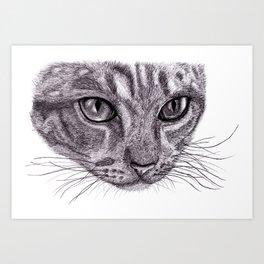 Cats eyes... Art Print