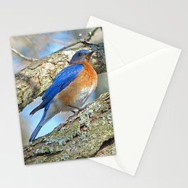 Bluebird in Tree Stationery Cards