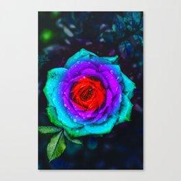 Colorful Rose Canvas Print
