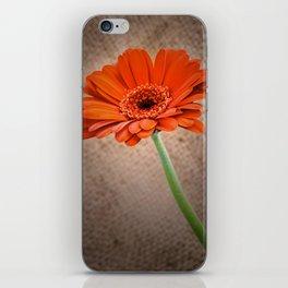 Gerbera iPhone Skin