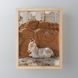 Baby Donkey Framed Mini Art Print