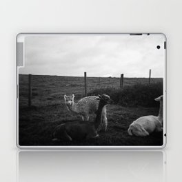 Alpaca/llama paddock Laptop & iPad Skin