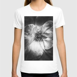 closeup blooming rose in black and white T-shirt