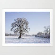 Snowy Oak. Art Print