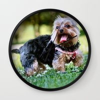yorkie Wall Clocks featuring Darling Yorkie by IowaShots
