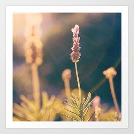 Glow of Lavender Art Print