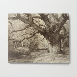 Vintage Photograph of Large Old Tree Metal Print