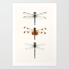 Dragonfly Collector Art Print