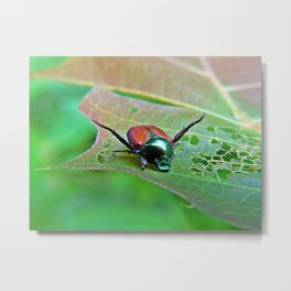 Japanese Beatle Metal Print