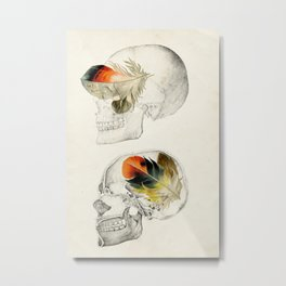 Feathers In My Head Metal Print