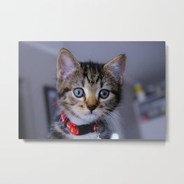 Minx the Cat Metal Print