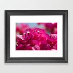 Bougainvillea flowers 843 Framed Art Print