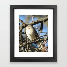 Northern Mockingbird Framed Art Print