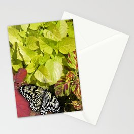 Black and White Butterfly Stationery Cards