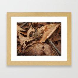 Make Like a Toad and Leaf Framed Art Print