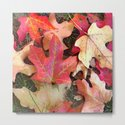 Maple Leaves in Fall by bettymackey