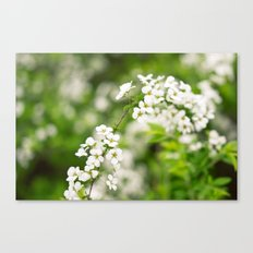 Snow Willow Canvas Print