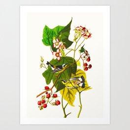 Black and Yellow Warbler Bird Art Print